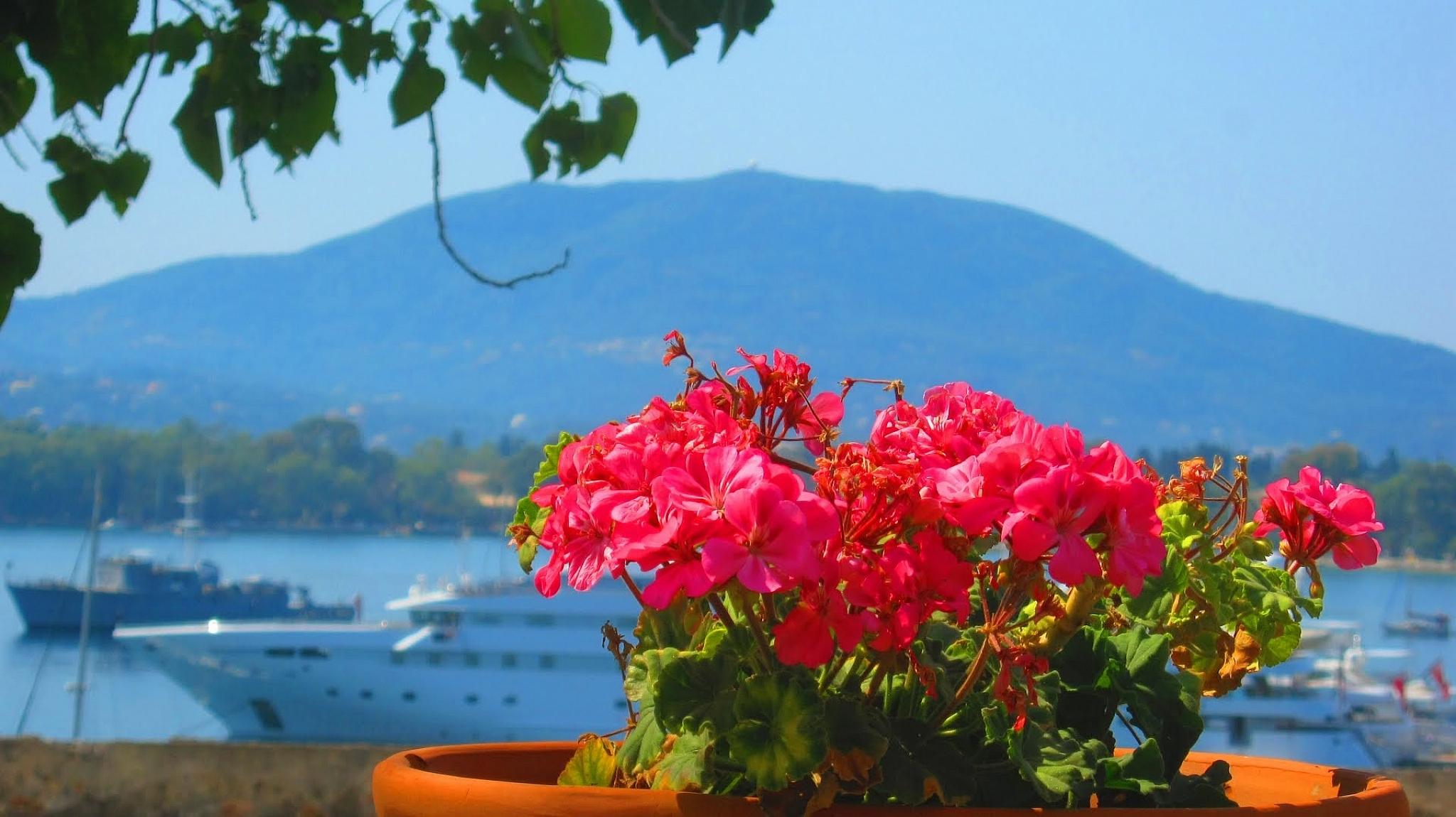 Северная греция недвижимость