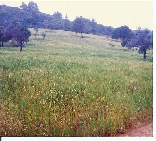 Земельный участок в Скиатос