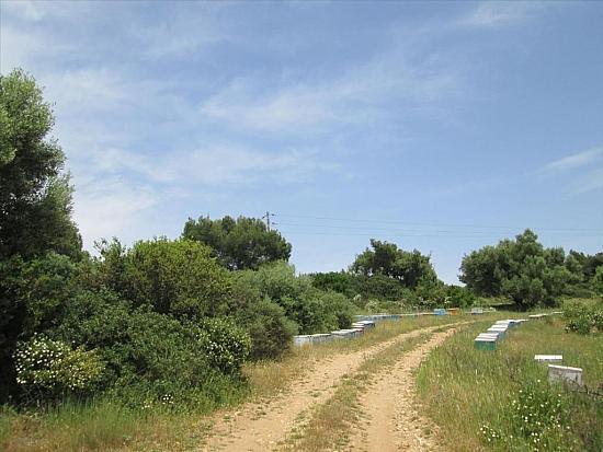 Землю в остров Ситония дом в деревне